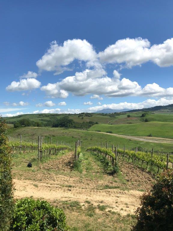 One of several vineyards at Altesino.