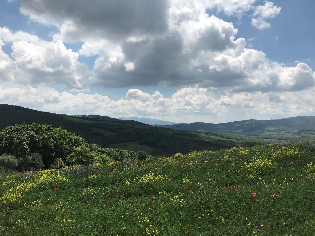 Tuscany (1).jpg