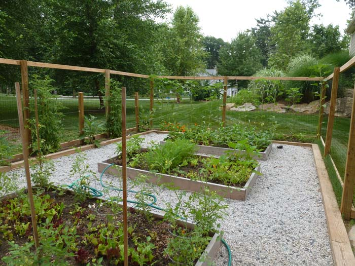 Serre-vegetable garden (1).jpg