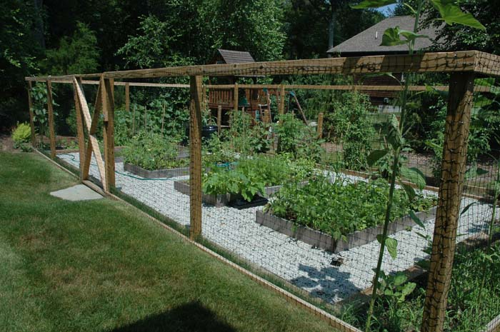 Serre-vegetable garden (2).jpg