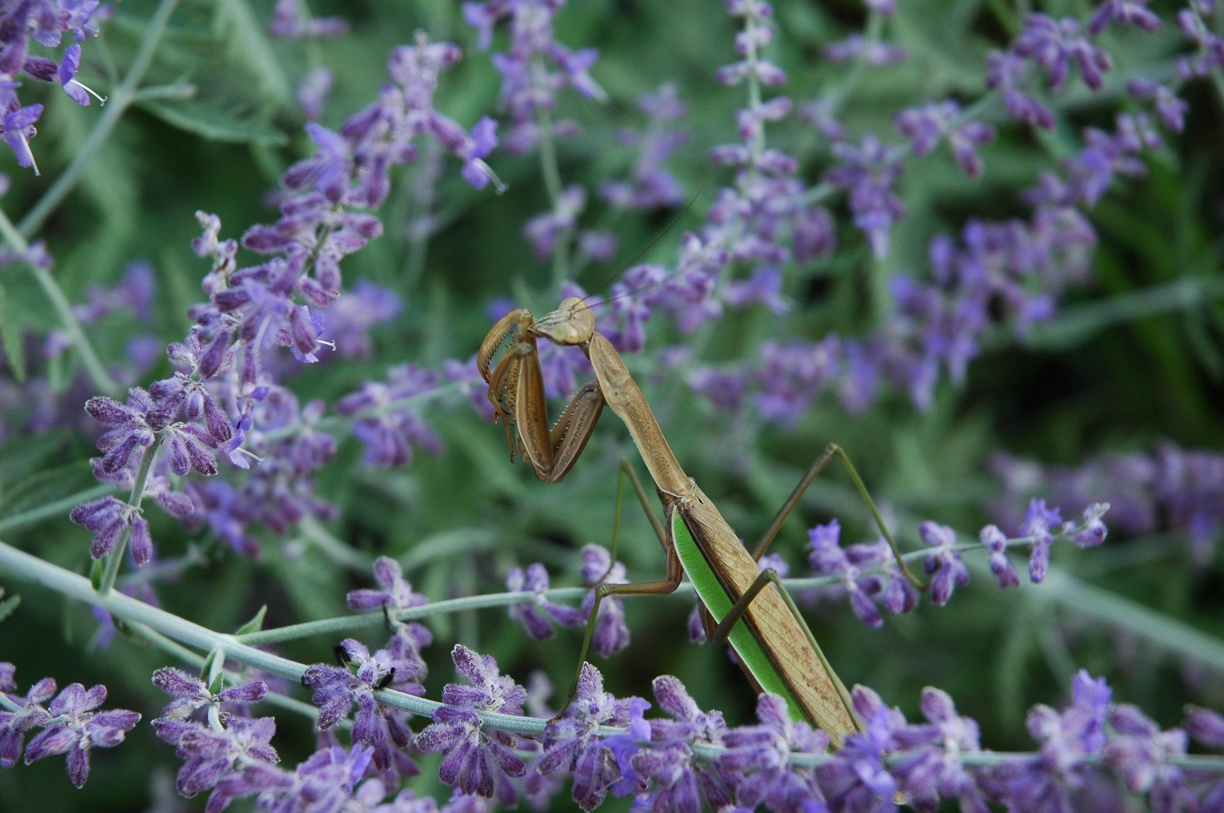 Pollinator Habitats & Rain Gardens