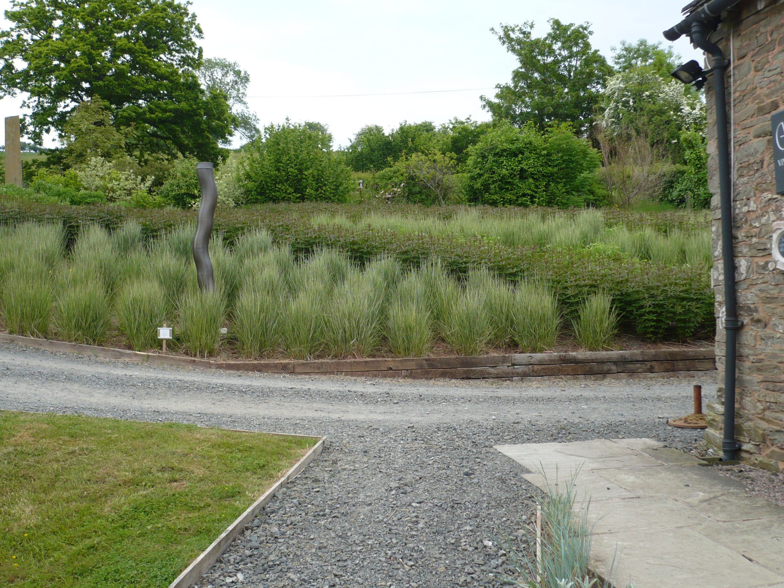 Grasses bank spring (2013)
