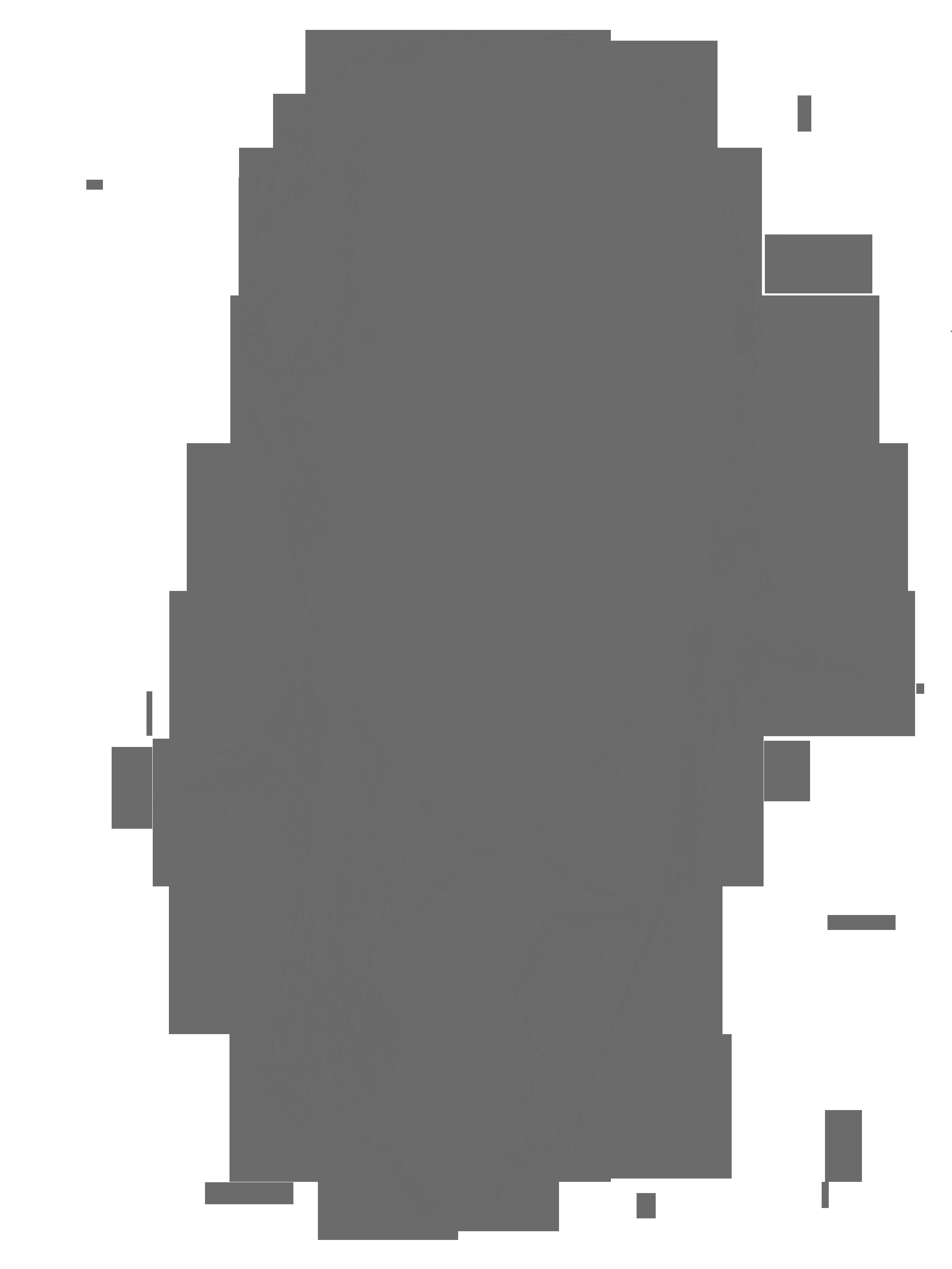 TR-Illustration.png