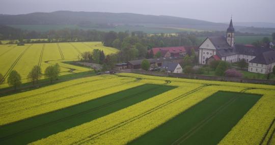 """Bild: """"Die Rapsstreifen in voller Blüte. Daneben Weizen, am Kloster Grauhof."""