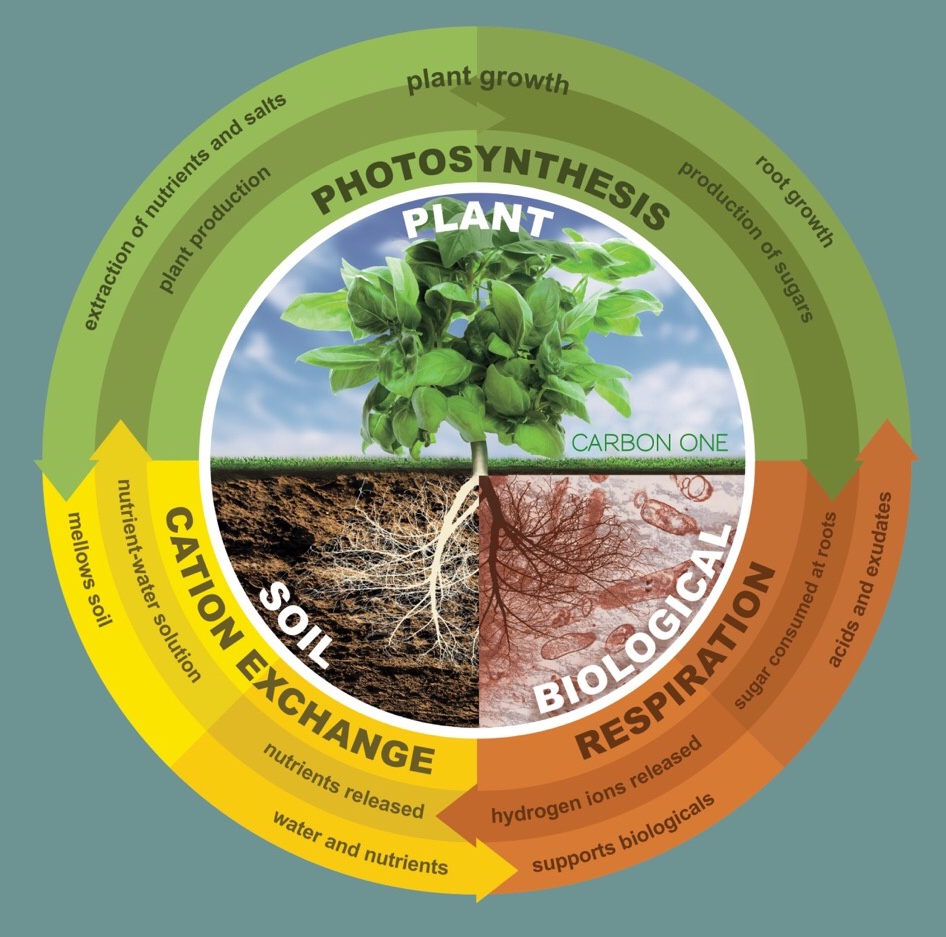 Understanding Plant Health, Production, and Growth Cycles -