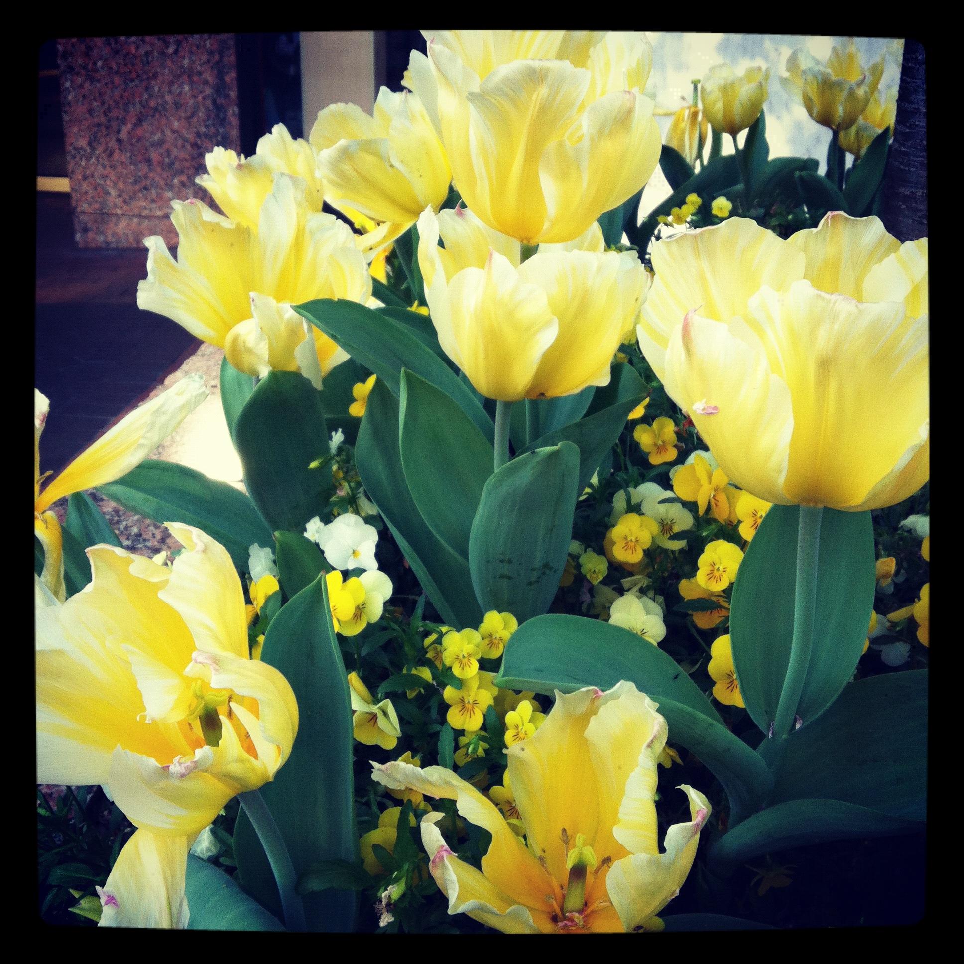 3-25-12_Springtime_1.jpg