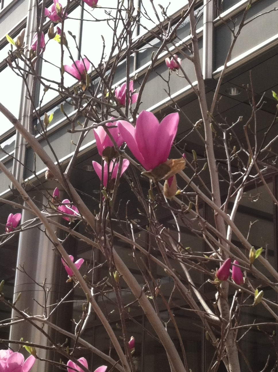 3-25-12_Springtime_6.jpg