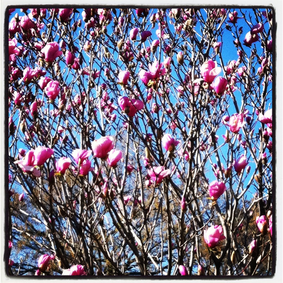 3-25-12_Springtime_7.jpg