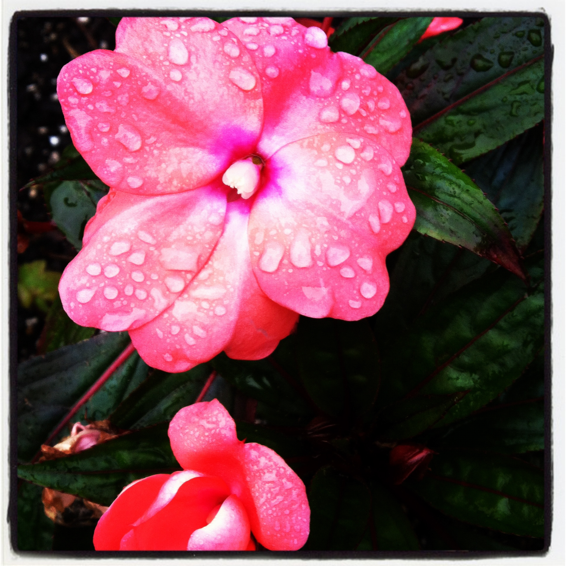 my ultimate favorite... pink, raindrops, and lots of beautiful color