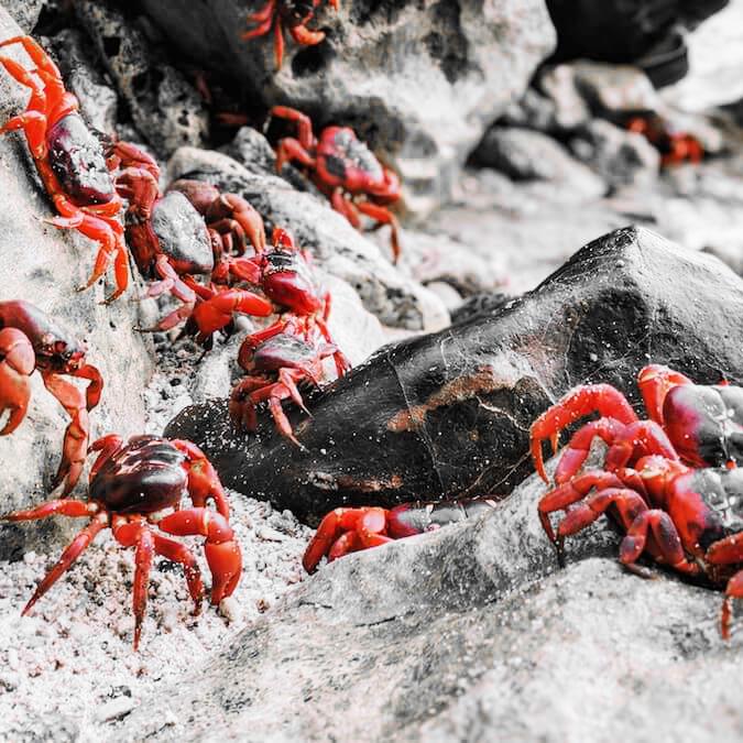 Christmas-Island-mp3-image.jpg