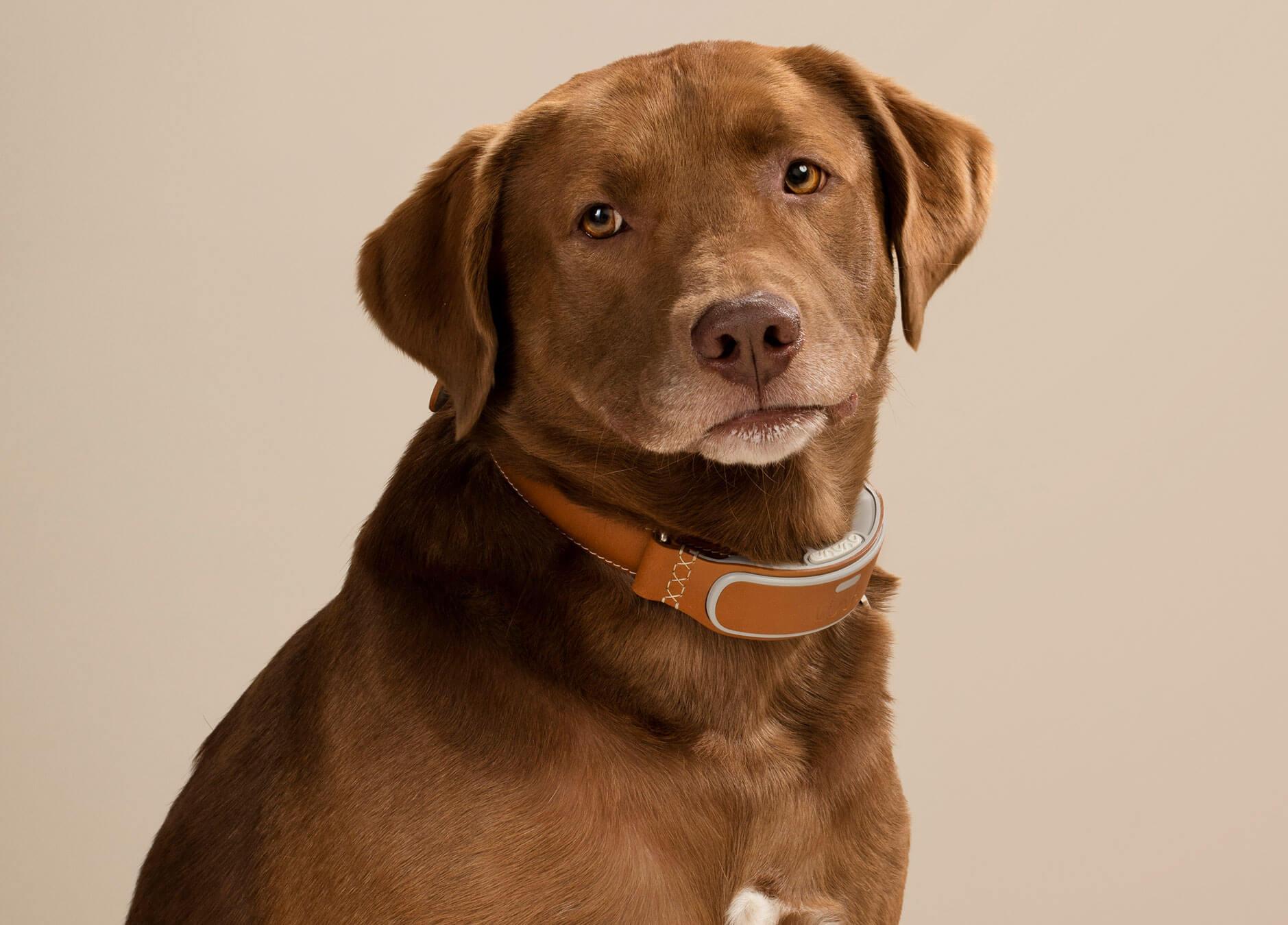 Dog-Link-AKC.jpg