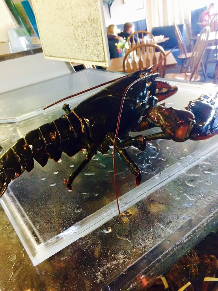 8 LB. WHOLE MAINE LOBSTER!