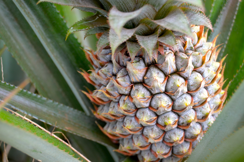 pineapple-lilikoi.JPG