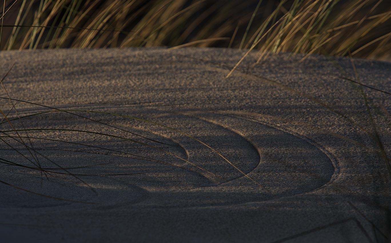 """""""Dans cet environnement, une étrange chorégraphie se dessine au fil des âges, accompagnée par le va-et-vient retentissant de l'eau. Quelques pins frêles semblent se mouvoir, tels des danseurs privés de leur jambes, et là-haut, sur les dunes, les coiffes des oyats enracinés frémissent à la moindre brise. Sous l'emprise d'un souffle puissant, leurs fuseaux ploient et les épis caressent le sable fin ; n'espèrent-ils pas plutôt trouver une prise en vain ?    Orchestré par le vent, j'aime être le témoin de ce ballet si singulier."""""""