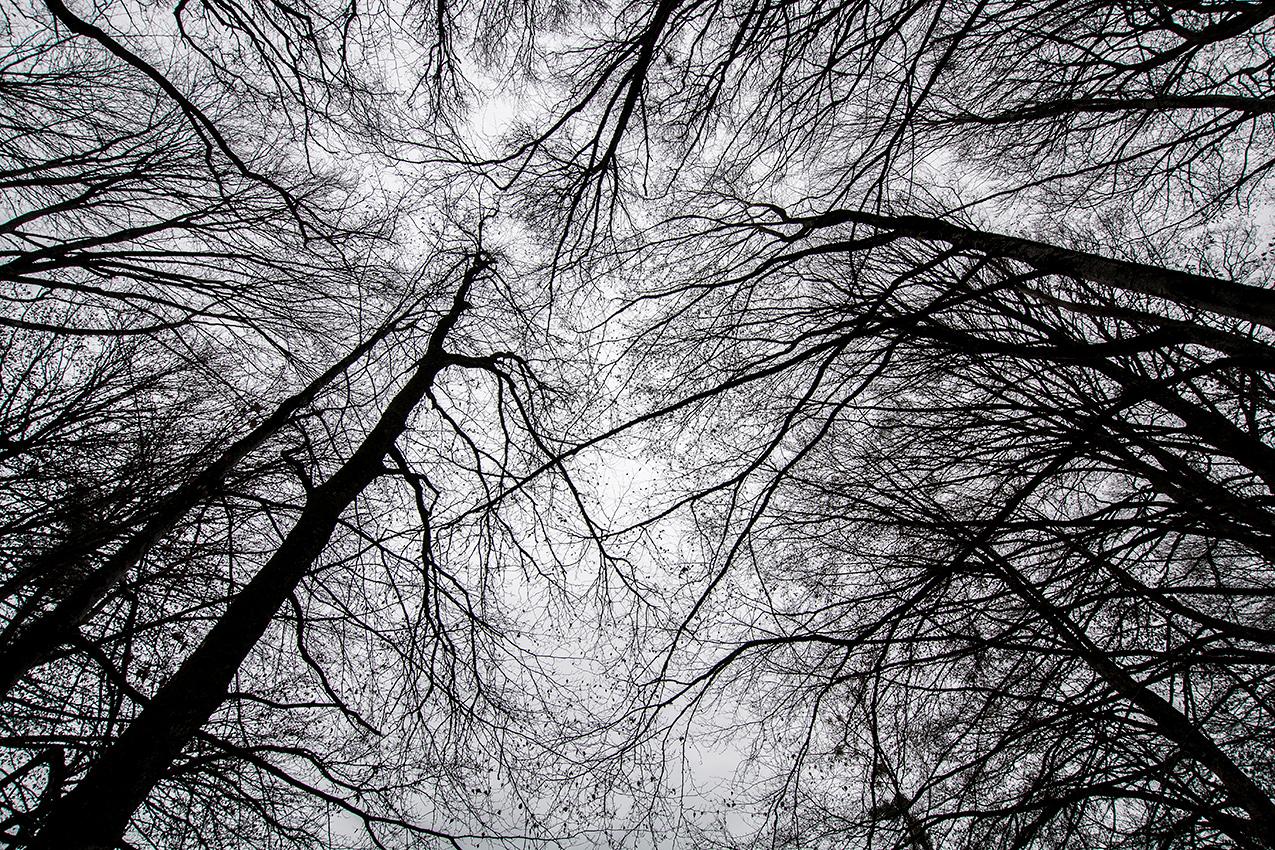 Sous les arbres dévêtus /  Under the naked trees