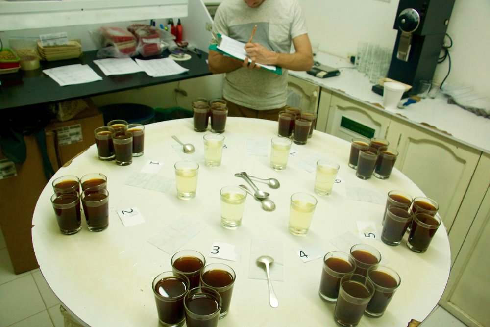 Jotting down the cupping notes and scores at Banexport in Pitalito.