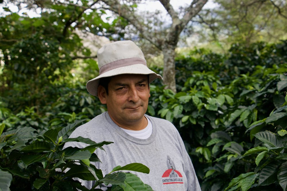 Andres amongst his coffee trees.