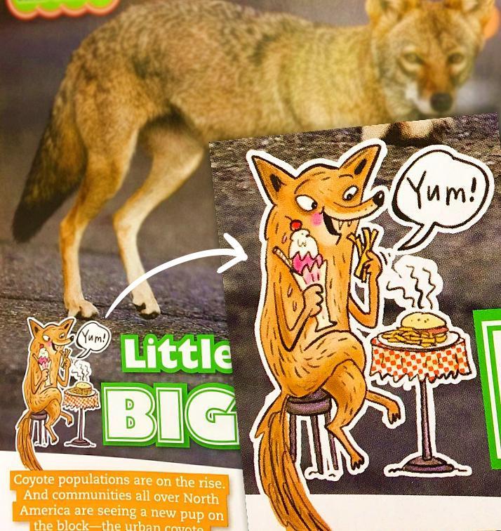 owl18-coyote1.jpg
