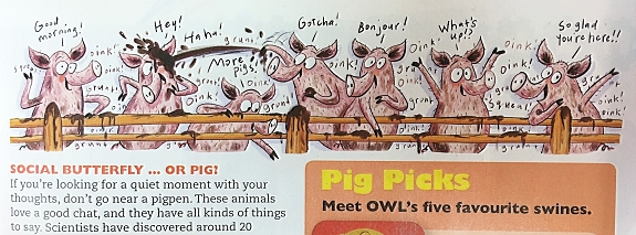 owl-pigs-sp2.jpg