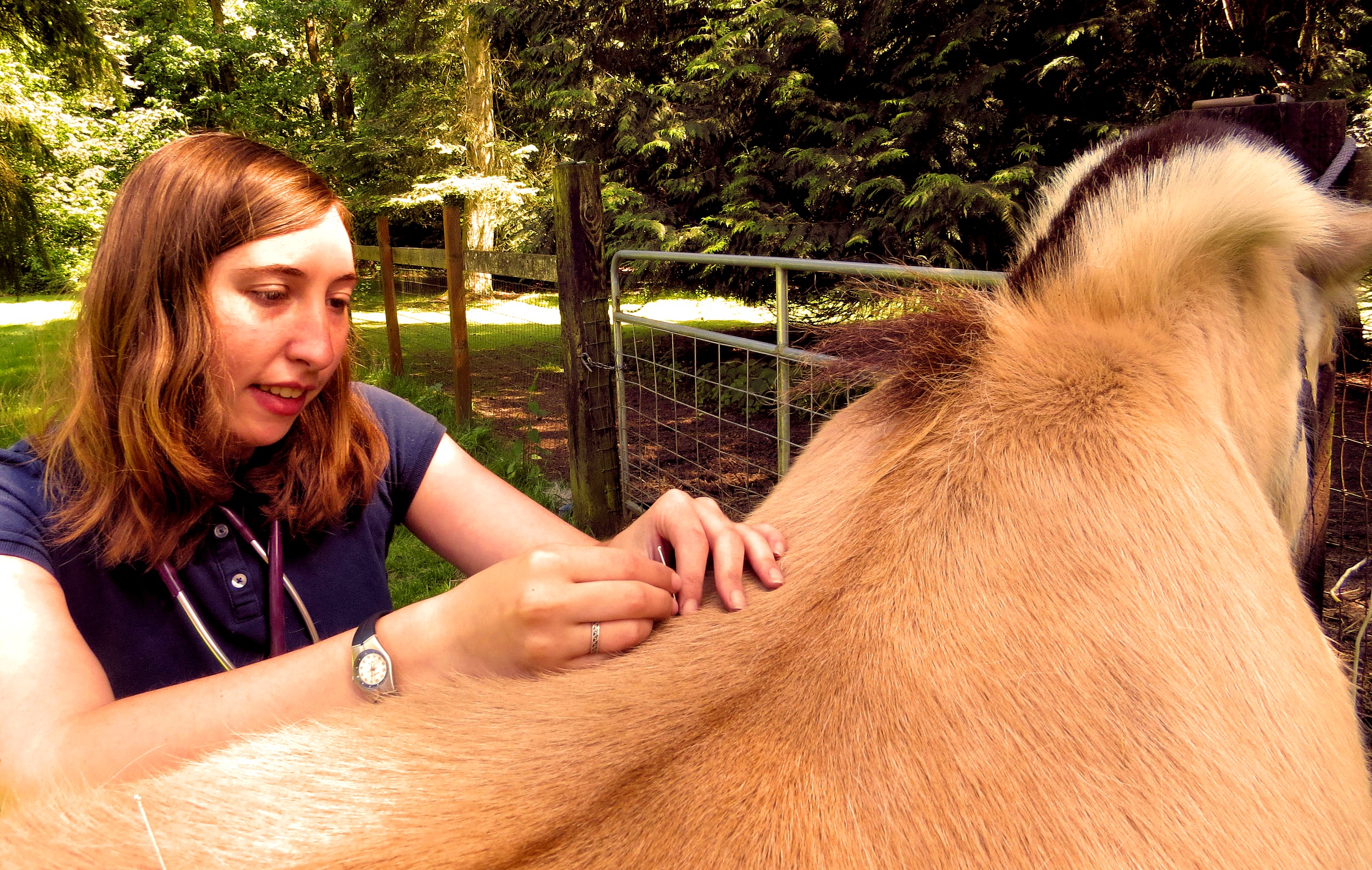 acupuncture_for_horses.jpg