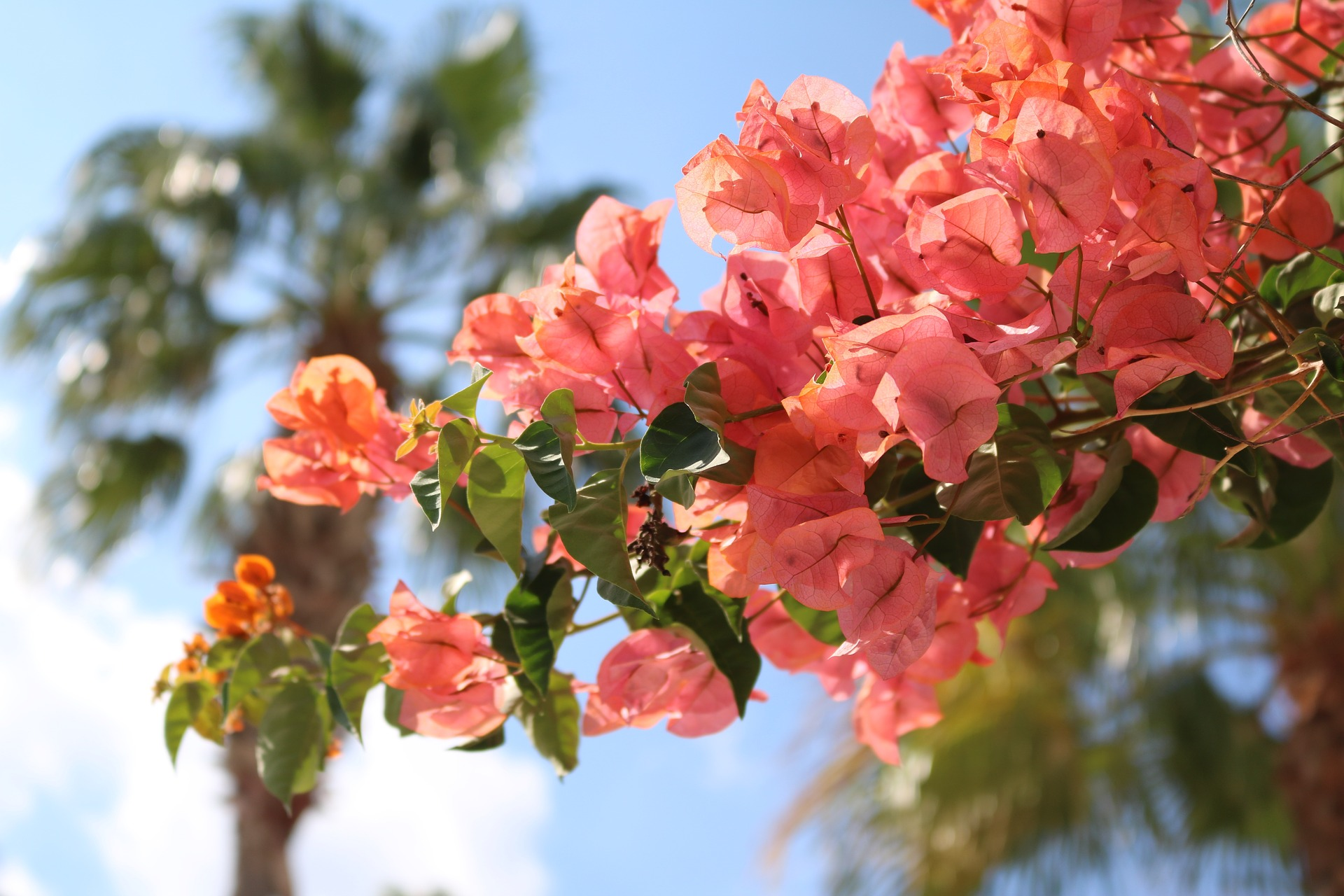 Florida_Keys_flowers.jpg