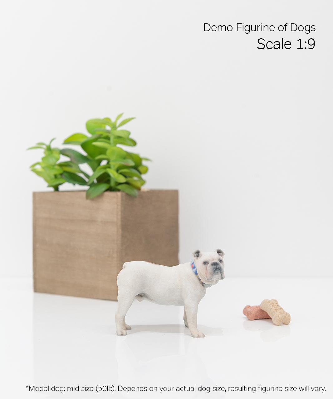 Scale Demo_Dog_4-09.jpg
