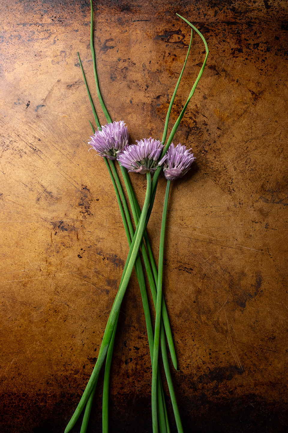 Chive and flowers on a rusty metal background.