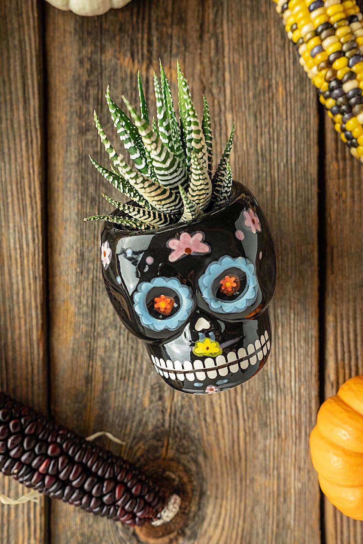 JodiLoves-Trader-Joes-Fall-2019-skull.jpg