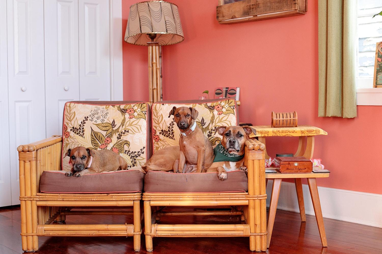 new-orleans-family-pet-portrait-8.jpg