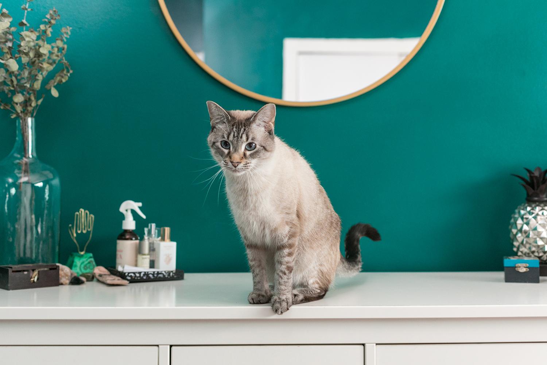 new-orleans-family-pet-portrait-21.jpg