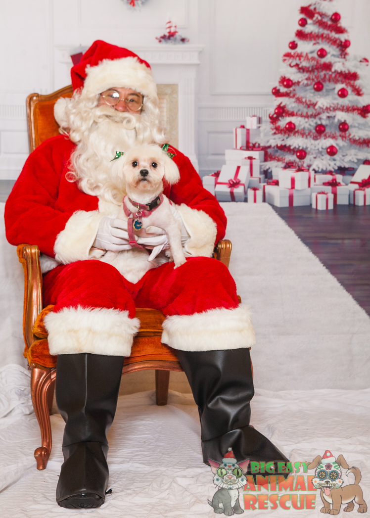 Santa pet photos are cool but I wanted to do it better.