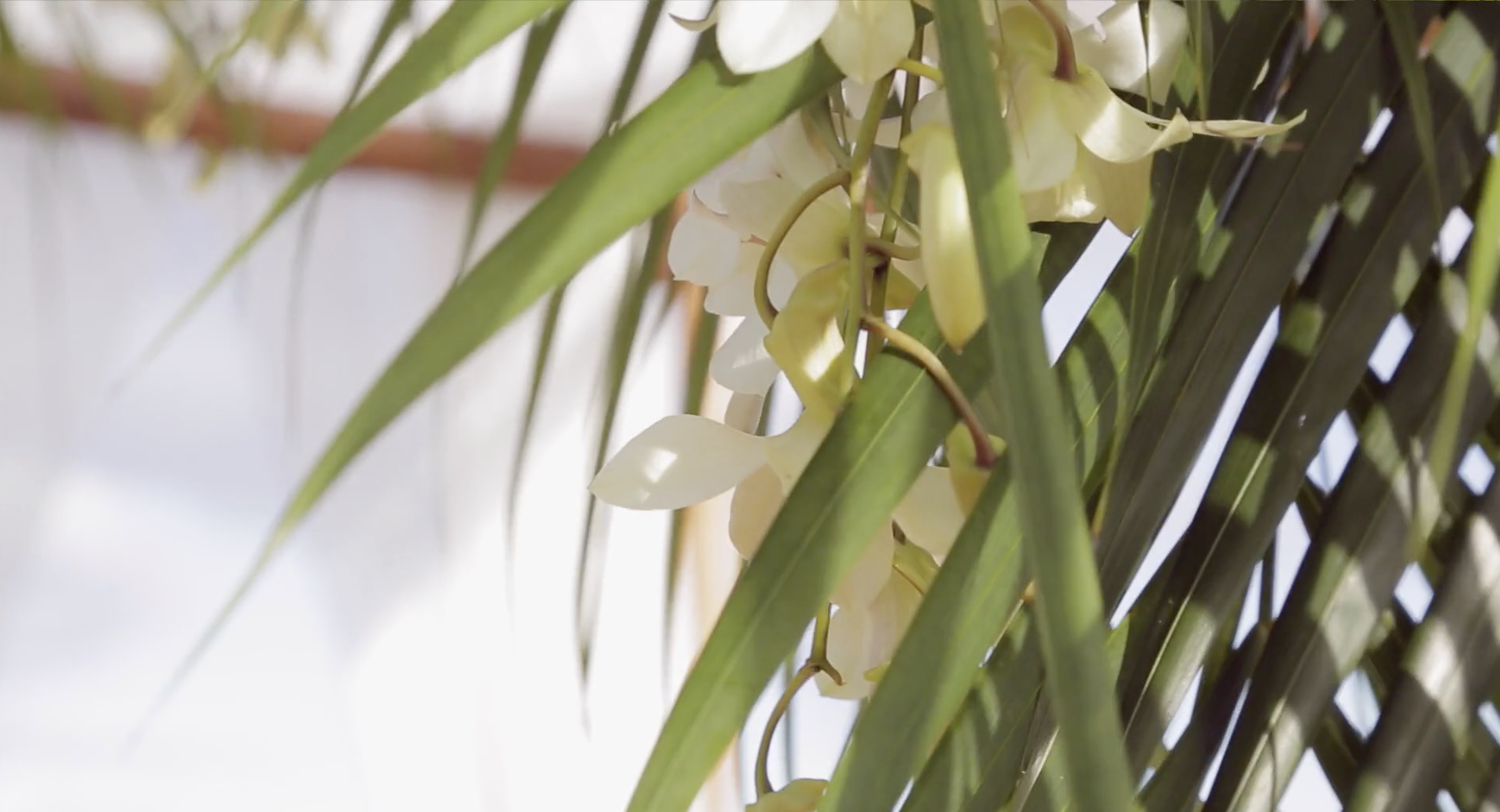 Hawaii palm wedding florals