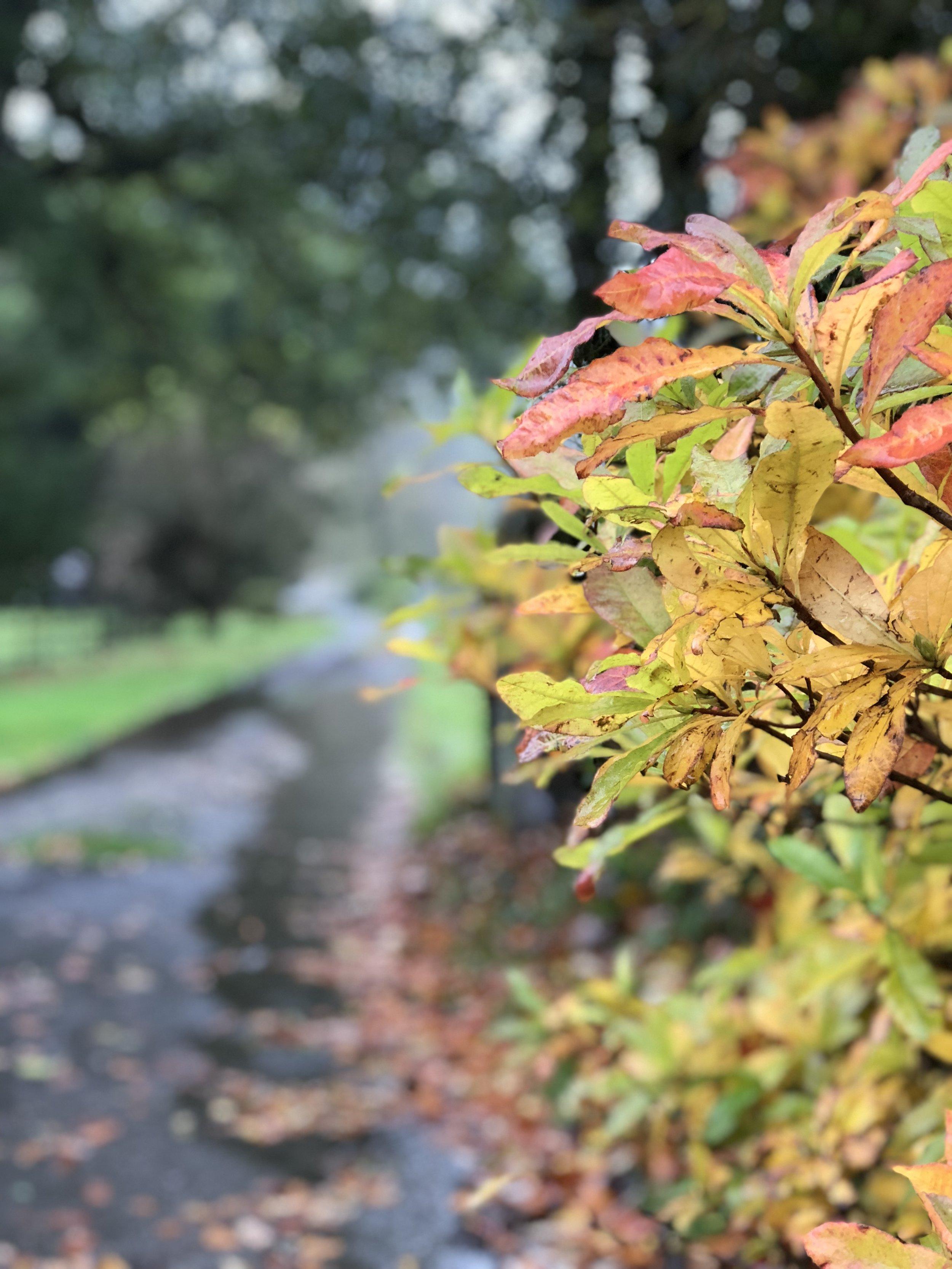 wet leaves.jpg