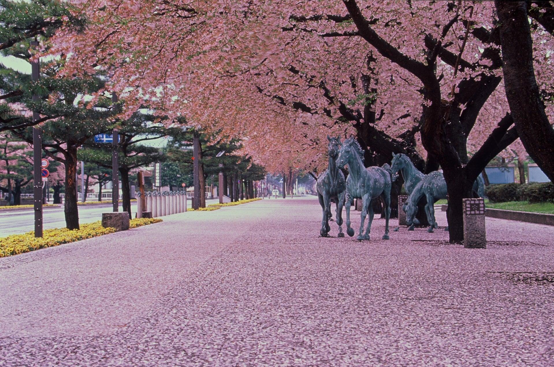 十和田市街地