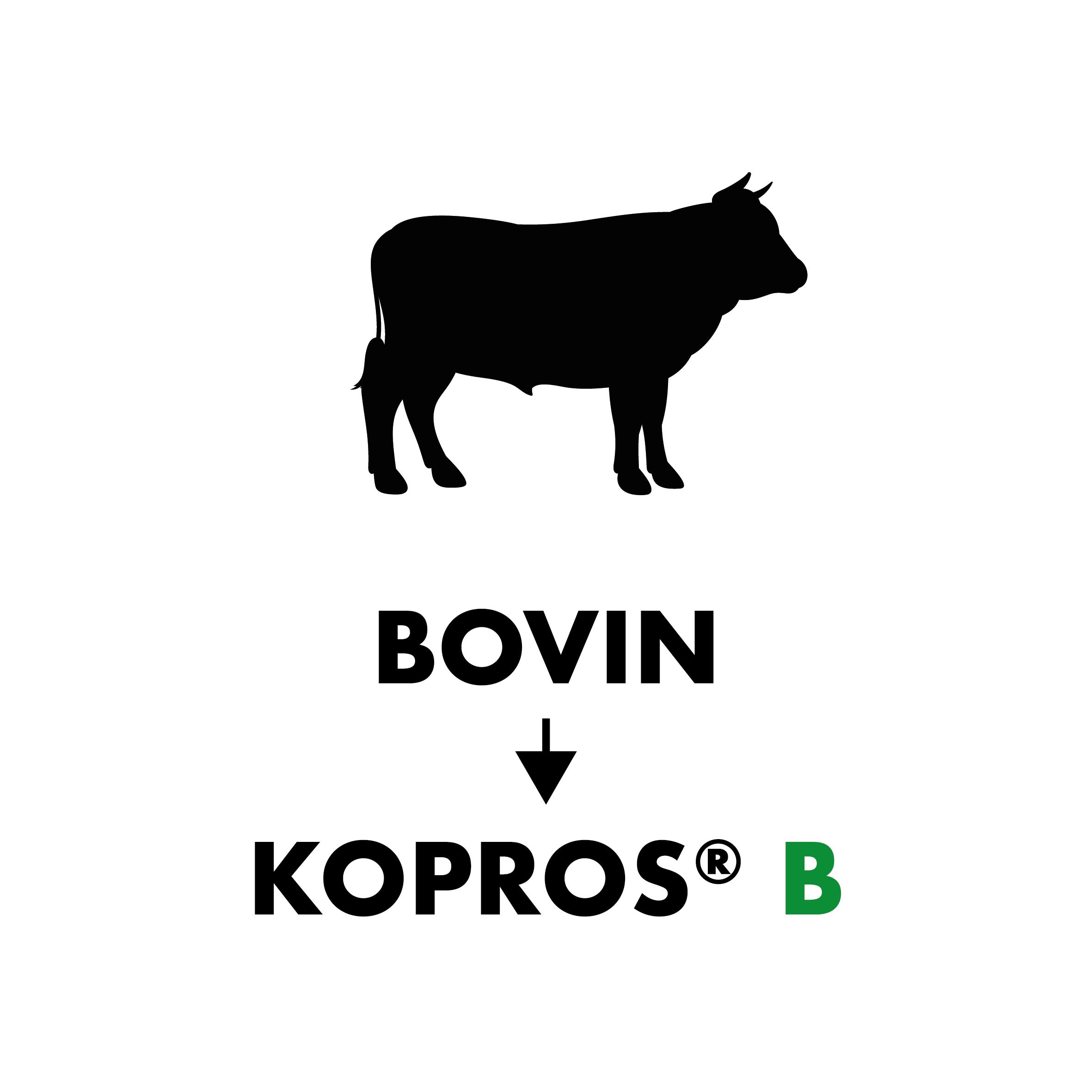 Copie de Bovin