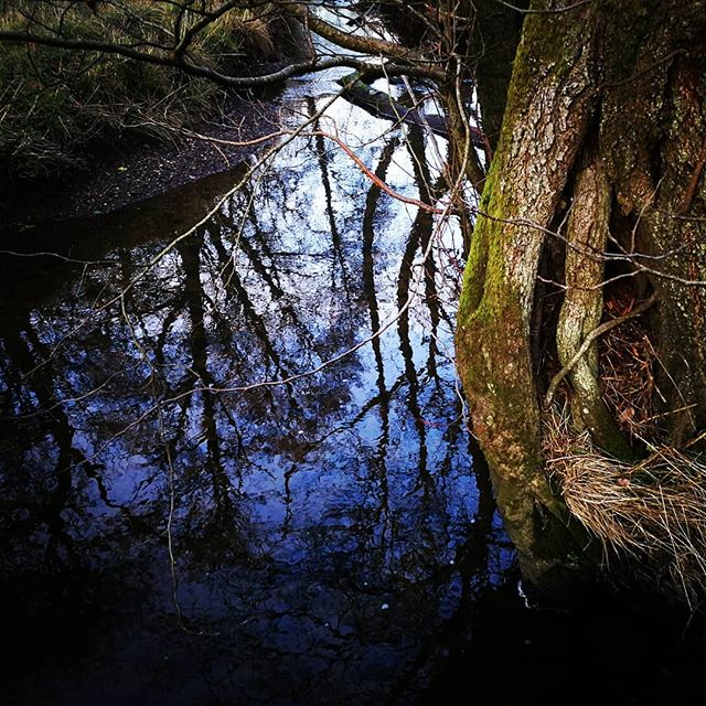 Winter #reflections #FforestFields