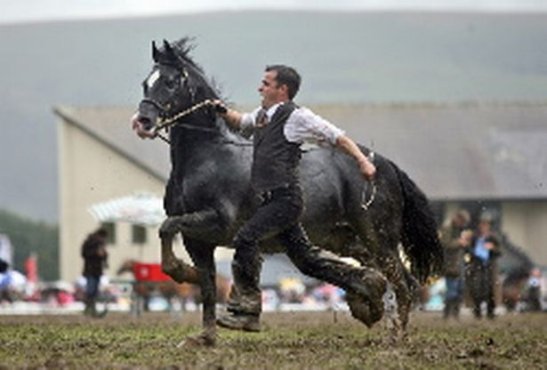 royal-welsh-horses-952693615.jpg