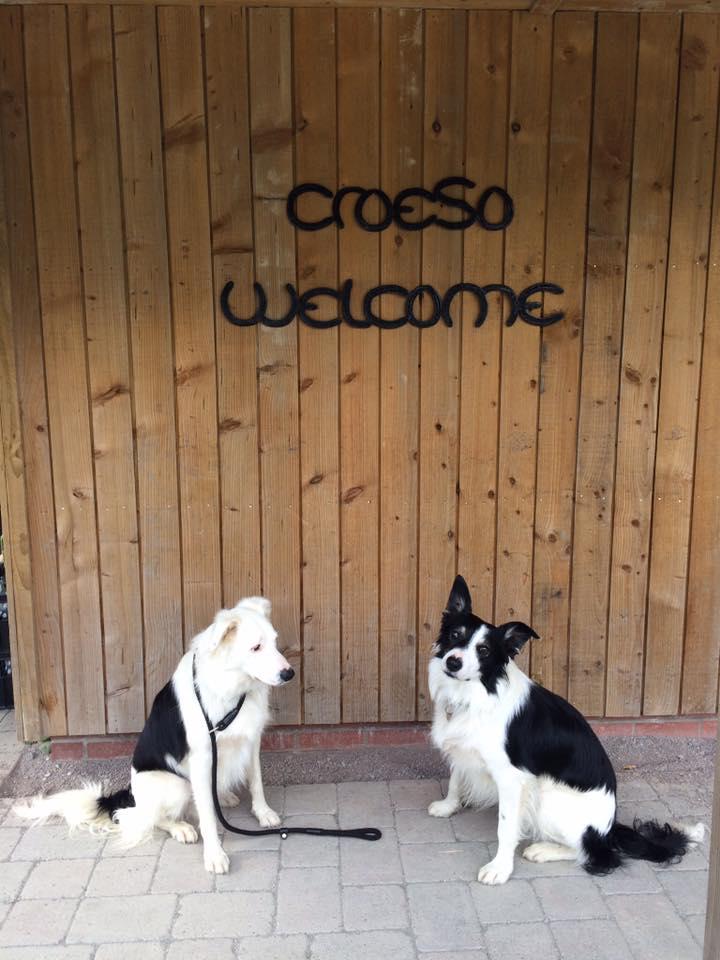 Croeso-dogs.jpg