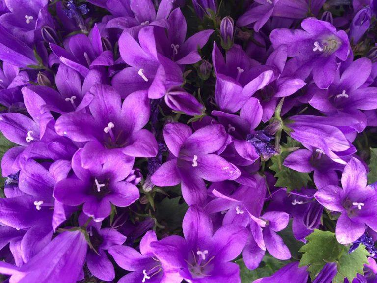 Flowers-campite-768x576.jpg