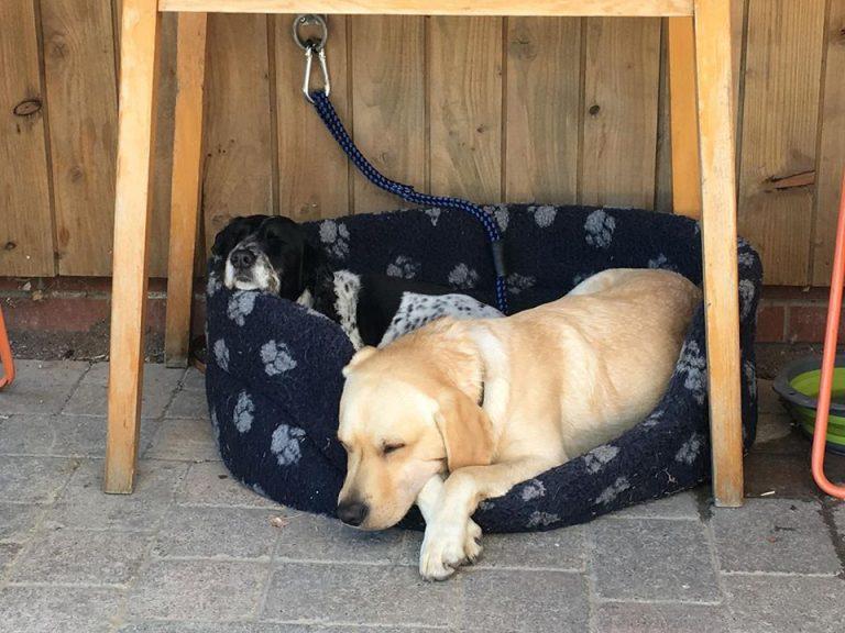 Buddy-and-Meg-asleep-768x576.jpg