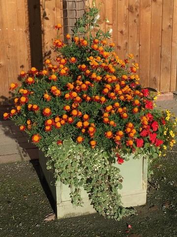Autumn-Half-Term-Suzies-Planters-640x480.jpg
