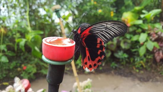 magic-of-life-butterfly.jpg