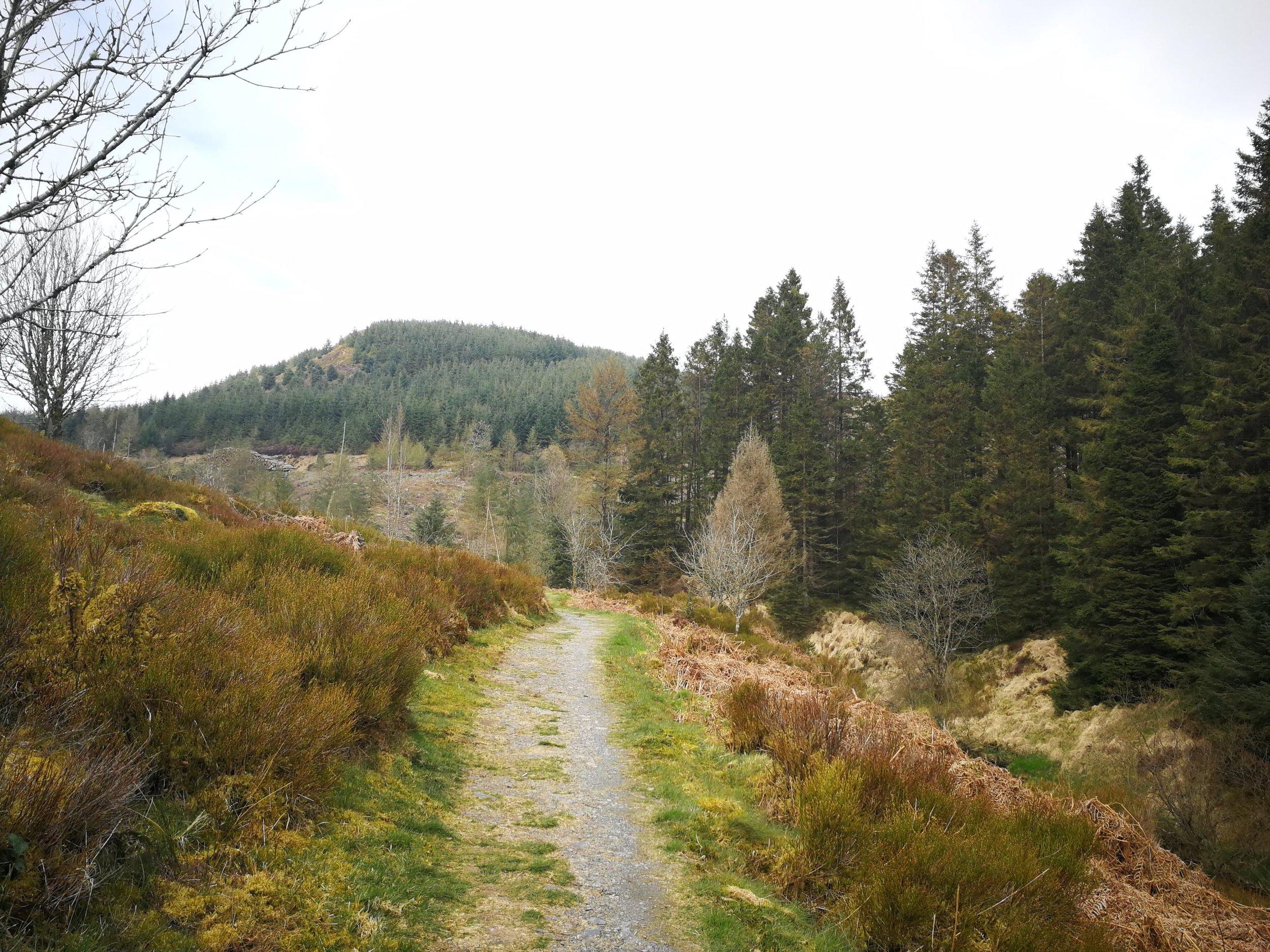 Hafren Forest.jpg