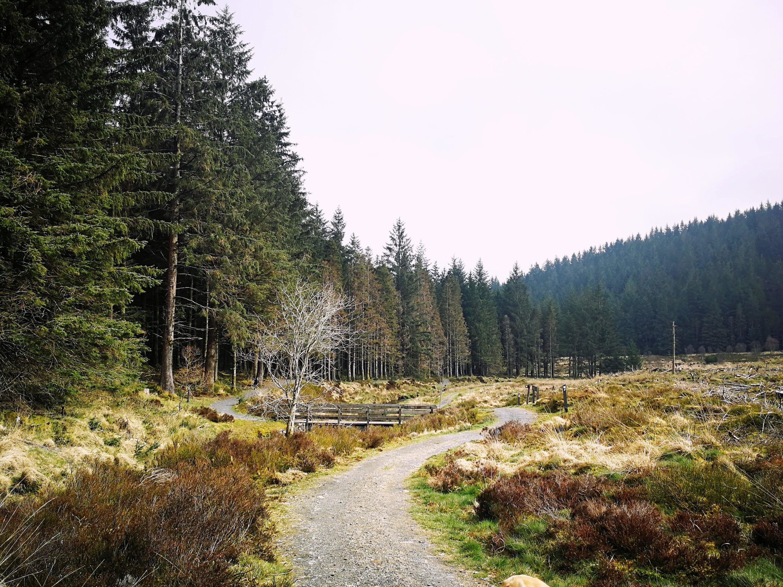 Hafren Forest Seven.jpg