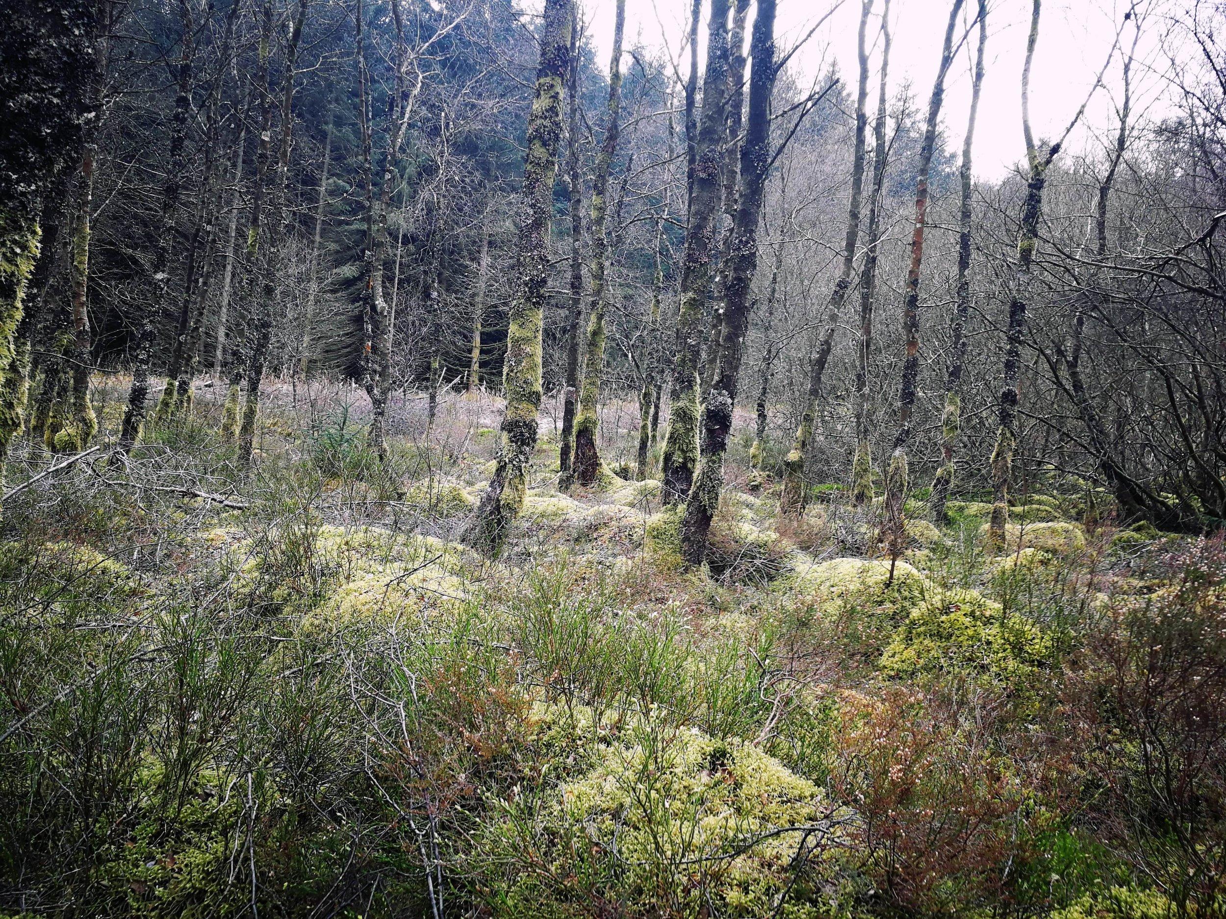Hafren Wood.jpg