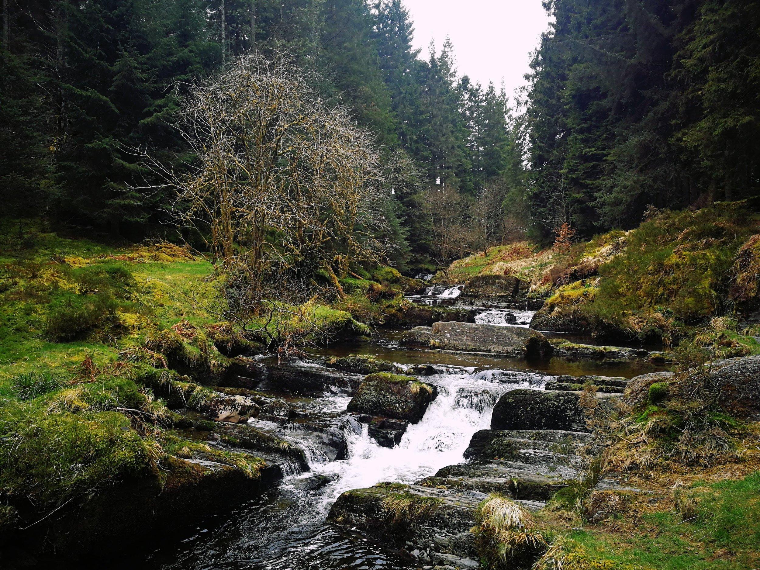 Hafren Forest Waterfall Cascade.jpg