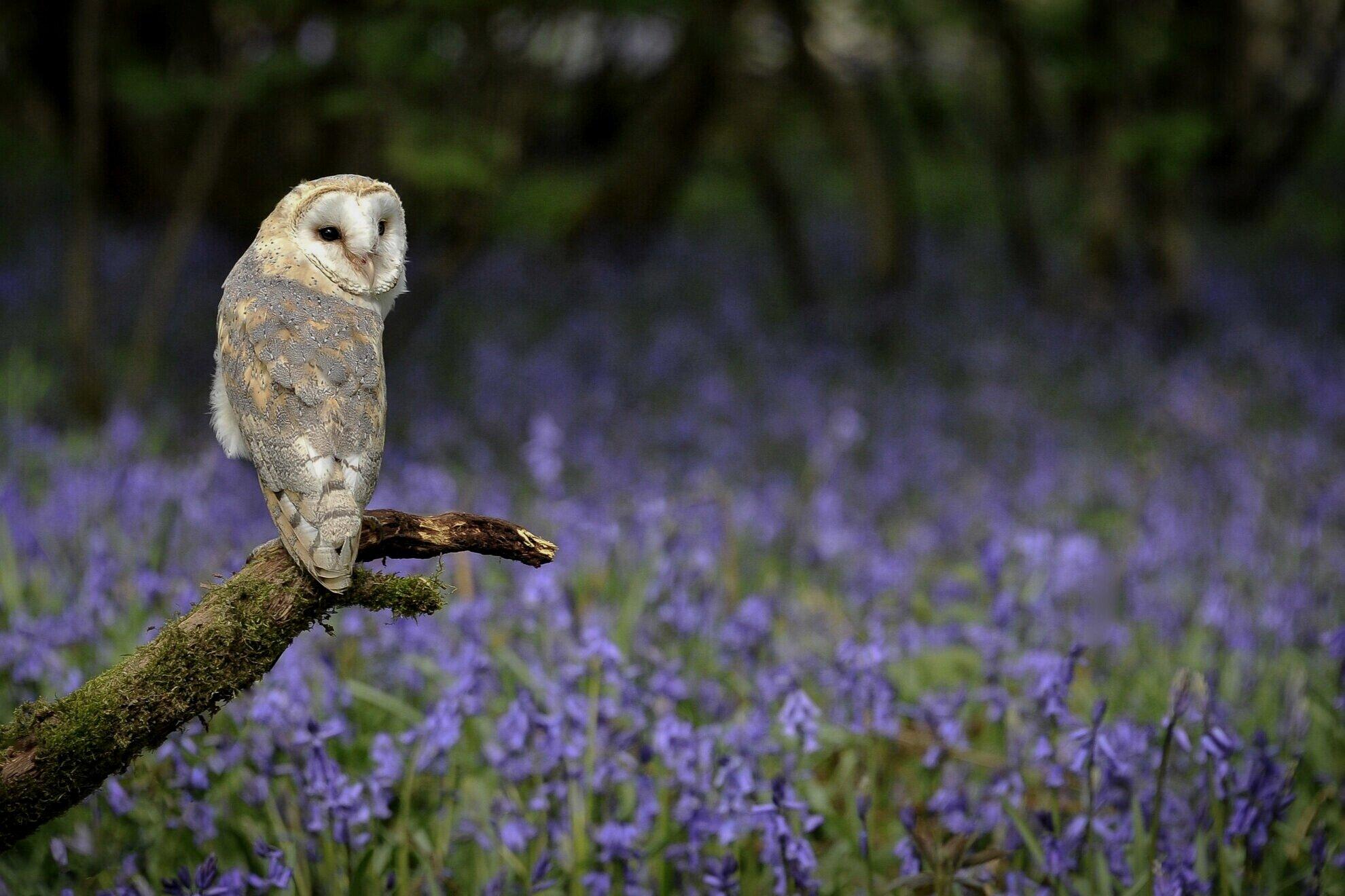 Shop Owl Boxes -