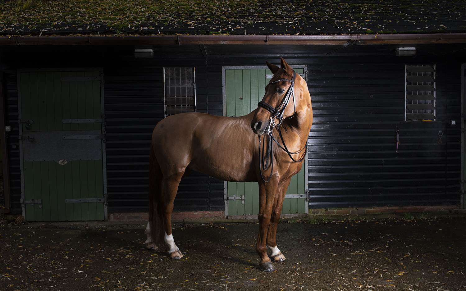 evie_lewis_chestnut_stables_small.jpg