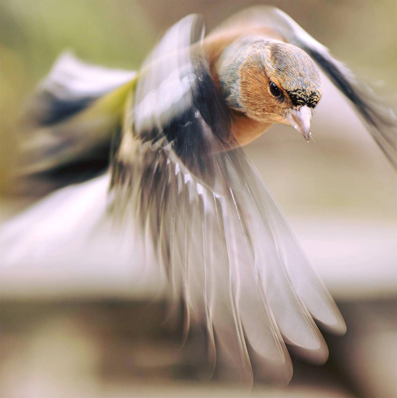 keith_jones_bird_small.jpg
