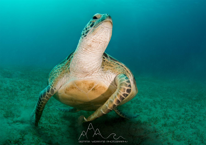 gemma_wearing_turtle_small.jpg